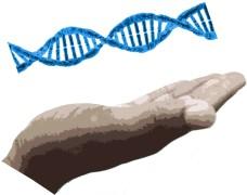 Genetic Material, Gene Manipulation