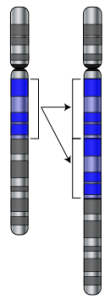 DNA, chromosome