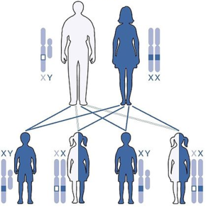 Gene Inheritance