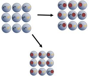 alleles, imprinting